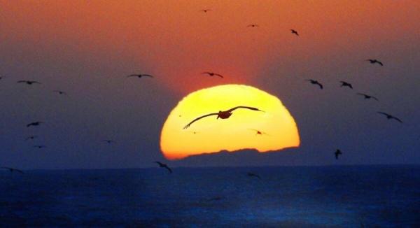 2838pelican-sunset-travela