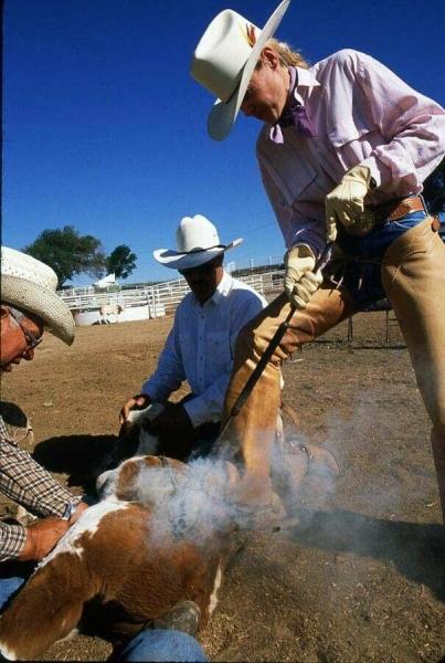2875texas-cattle-branding-becky-johnsona