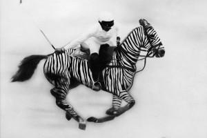 alex-cord-and-polo-zebra